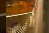 Туристы нашли крысу в холодильнике турецкого отеля