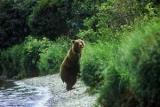 Иностранные туристы переломали кости после встречи с медведем на Камчатке