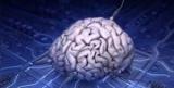 Специалисты создали интерфейс для подключения человеческого мозга к Интернету